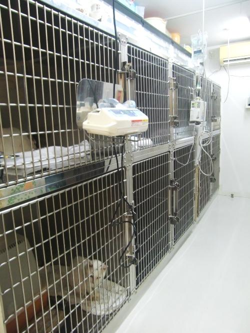 ふじい動物診療所5入院室